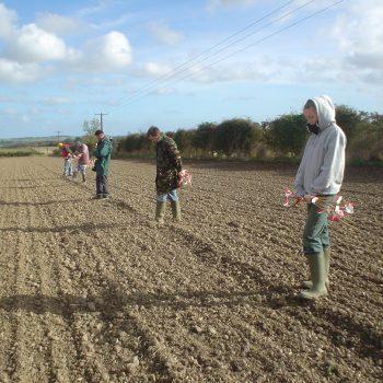 Fieldwalking.