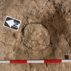 Cremation 5 prior to excavation showing the rim of the collared urn (scale = 0.5m). © Copyright ARS Ltd