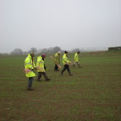 Fieldwalkers spaced 2m apart each scanning the ground 1m either side of them ensures that 100% of the field is covered. © Copyright ARS Ltd